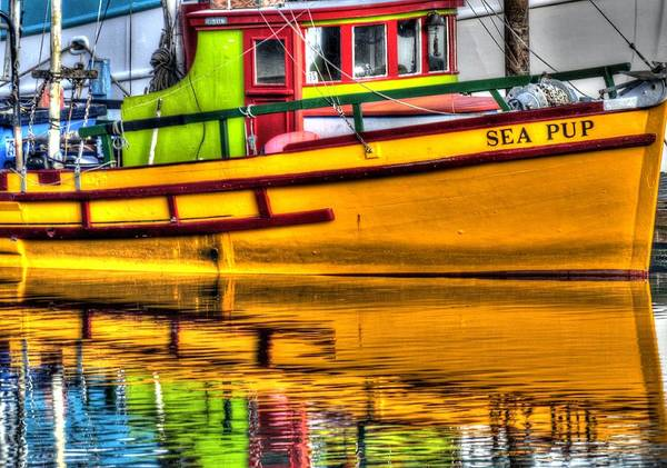 Photograph - Reflections Of The Sea Pup 2344 by Jerry Sodorff