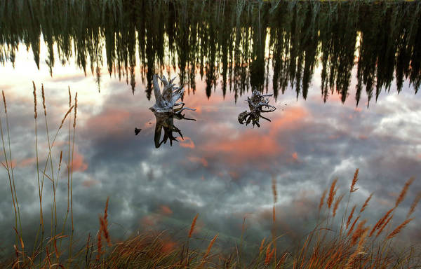 British Open Digital Art - Reflections Off Pond In British Columbia by Mark Duffy