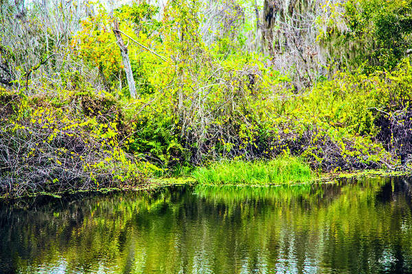 Wall Art - Photograph - Reflections On A Beautiful Day by Madeline Ellis
