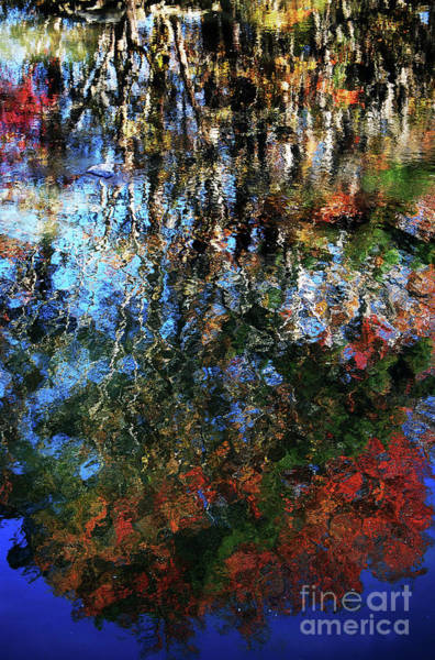 Critters Photograph - Reflective Abstract By God by Skip Willits