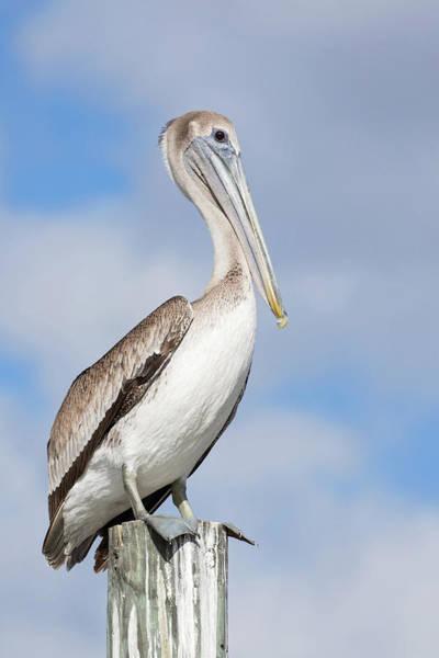 Photograph - Regal Bird by Eilish Palmer