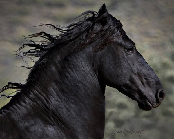 Photograph - Regal by Jean Hildebrant