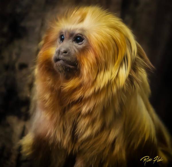 Photograph - Regal Monkey by Rikk Flohr