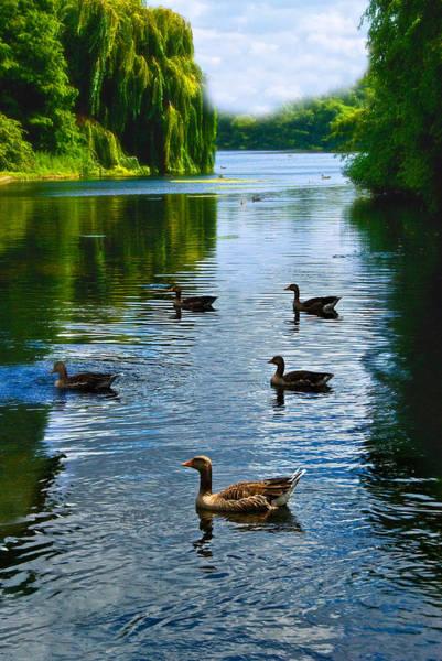 Photograph - Regent's Park by Harry Spitz