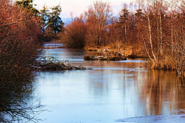 Photograph - Reifel In Winter by Lawrence Christopher