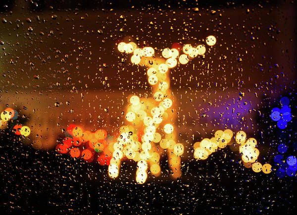 Photograph - Reindeer Bokeh by Rob Davies