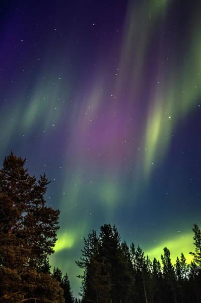 Photograph - Reindeer In The Sky Karasjok Norway by Adam Rainoff