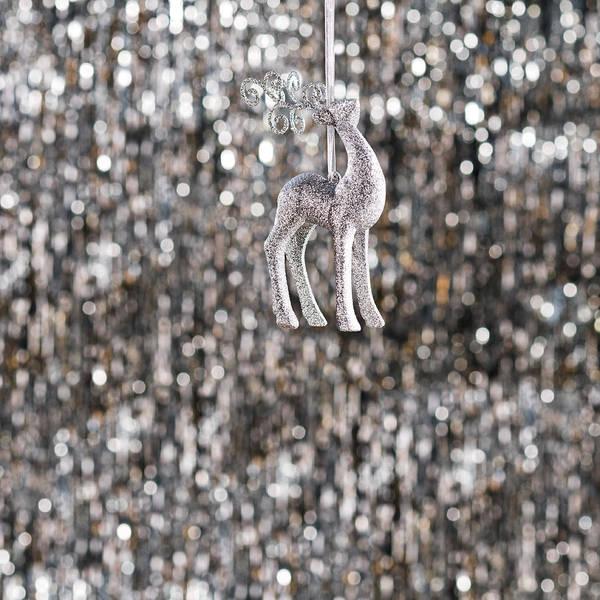 Photograph - Reindeer  by U Schade