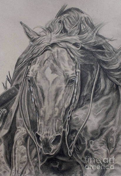 Equestrian Drawing - Reiner by Jana Goode