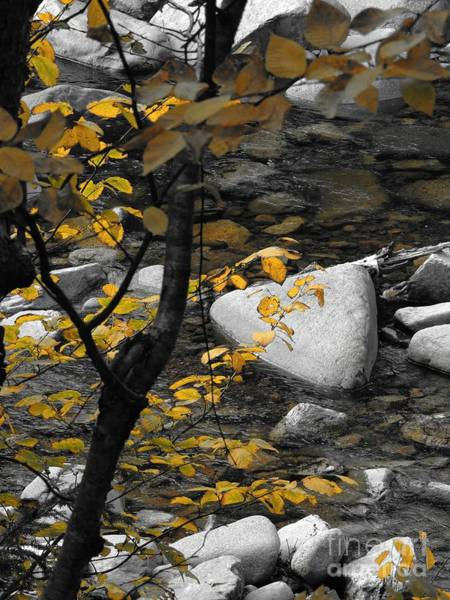 Photograph - Relaxing By A Babbling Brook by Marcia Lee Jones