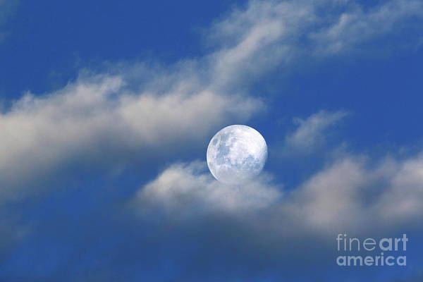 Photograph - Relaxing On A Bed Of Clouds by James Brunker