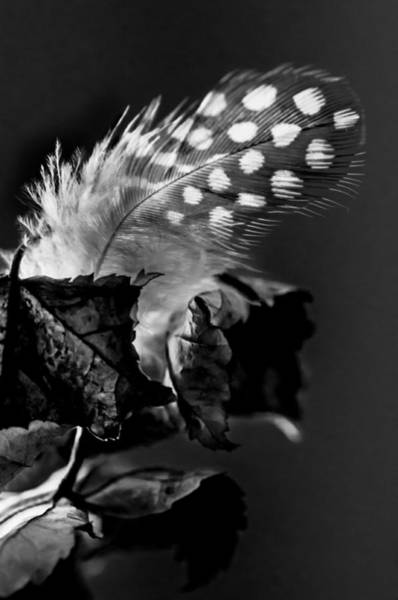 Flight Feathers Photograph - Release Me by Maggie Terlecki