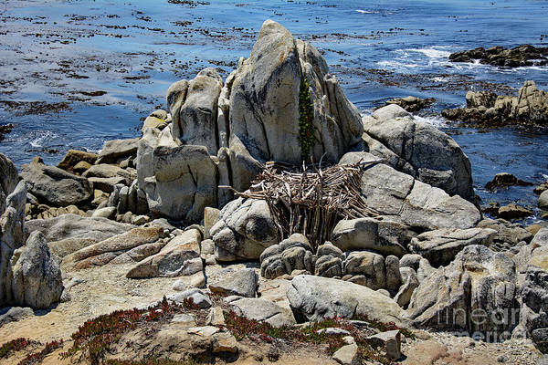 Photograph - Remains Of Ancient Rocks At Carmel Point by Susan Wiedmann