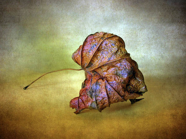 Photograph - Remains Of Autumn by Jessica Jenney