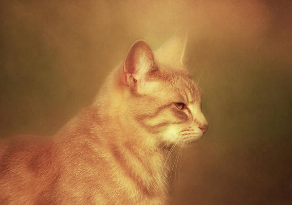 Photograph - Remember-i Own You-cat-art by Isabella Howard