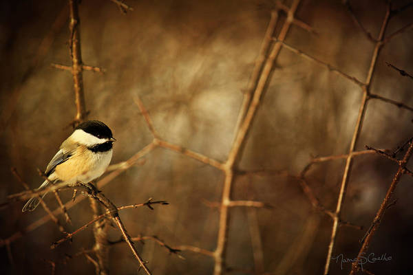 Chickadees Photograph - Remember Me. by Nancy  Coelho
