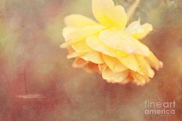 Photograph - Remember When by Beve Brown-Clark Photography