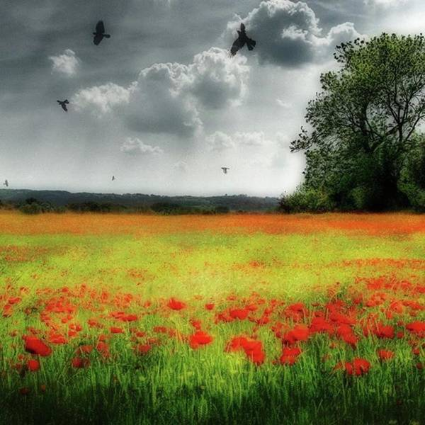 Remember #rememberanceday #remember Art Print