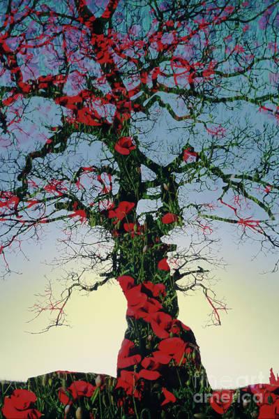 Fallen Tree Photograph - Remembrance Tree by Janet Burdon