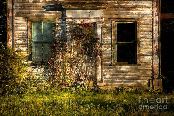 Wall Art - Photograph - Remnant Roses by John Stephens