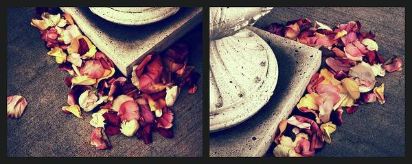 Wall Art - Photograph - Remnants Of Roses Diptych by Jessica Jenney