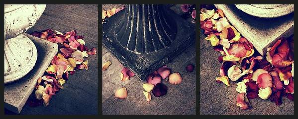 Photograph - Remnants Of Roses Triptych by Jessica Jenney