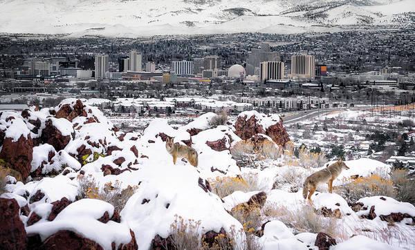 Photograph - Reno Coyotes by Tony Fuentes