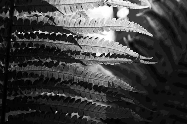 Photograph - Repetition by Randi Grace Nilsberg