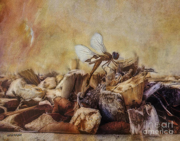 Digital Art - Respite Of The Mosquito Hawk by Rhonda Strickland