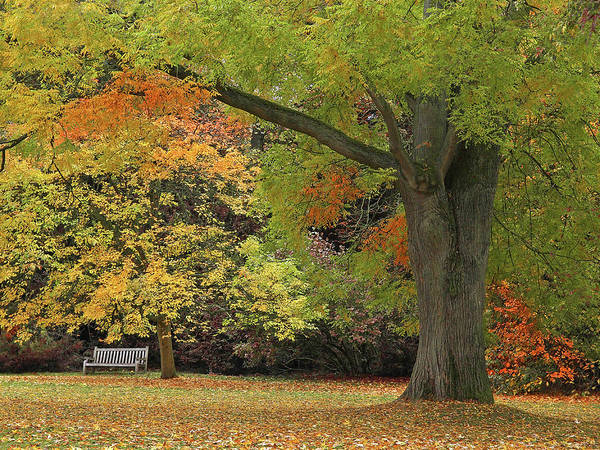 Photograph - Rest A While In Autumn's Splendour by Gill Billington