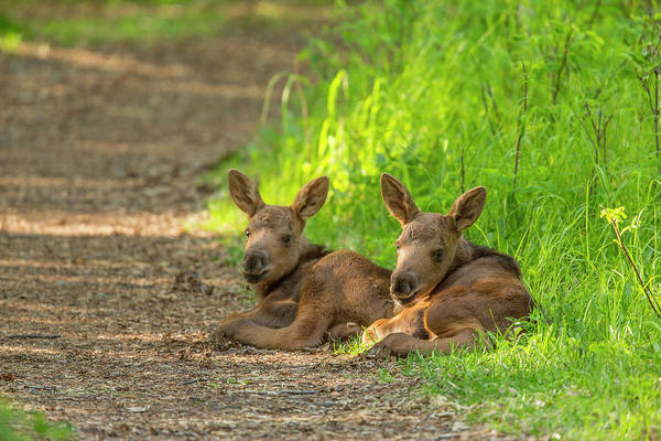 Wall Art - Photograph - Resting Along A Trail by Tim Grams