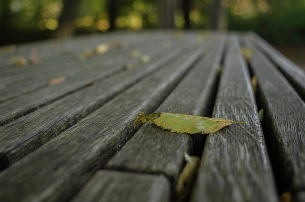 Photograph - Resting Autumn by Miguel Winterpacht