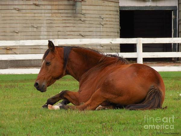 Photograph - Resting by Donna Cavanaugh