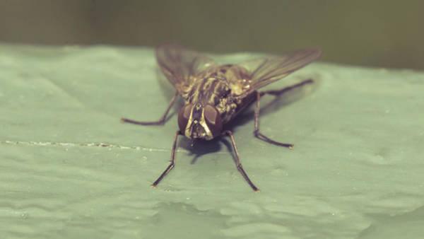 Photograph - Resting Fly On Piece Of Wood A by Jacek Wojnarowski