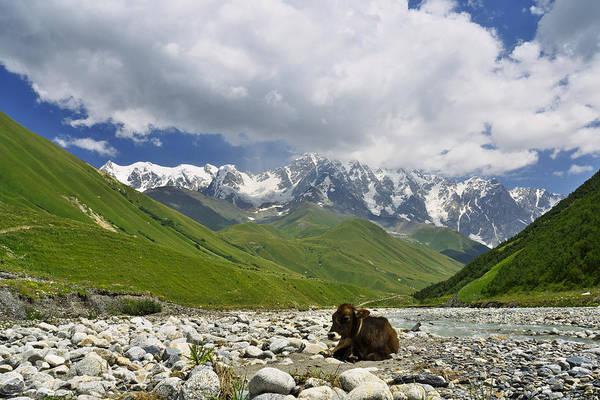 Photograph - Resting In Svaneti by Ivan Slosar