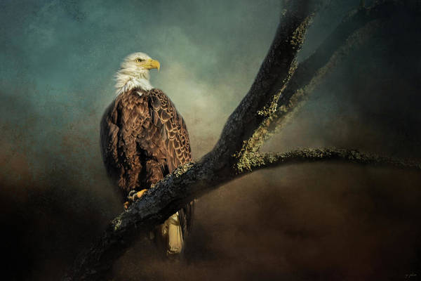 Photograph - Resting In The Light by Jai Johnson