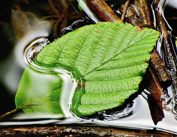 Photograph - Resting Leaf In Stream by Gary Slawsky