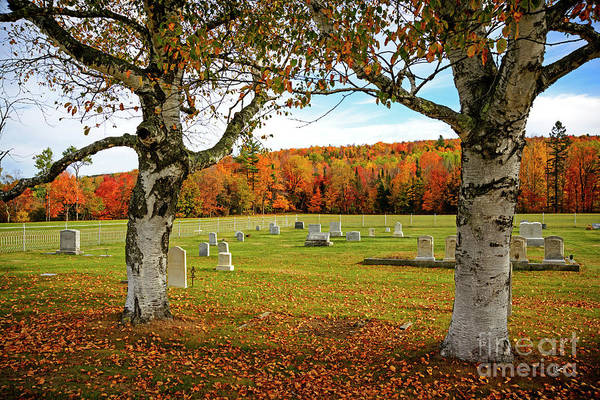 Photograph - Resting Place by Alana Ranney