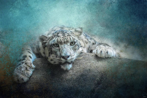 Photograph - Resting Snow Leopard by Jai Johnson