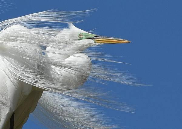 Photograph - Restless Wind 3 by Fraida Gutovich