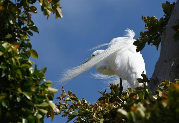 Photograph - Restless Wind by Fraida Gutovich