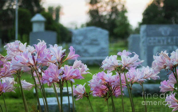 Photograph - Resurrection Lilies In The Cemetery by Karen Adams