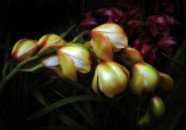 Photograph - Reticence by Jessica Jenney