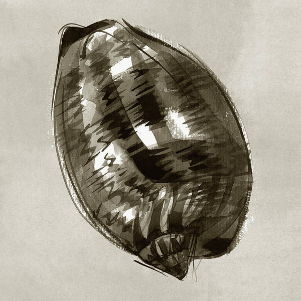 Painting - Reticulated Cowrie by Judith Kunzle