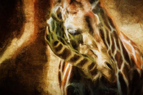 Photograph - Reticulated Giraffe  by Belinda Greb