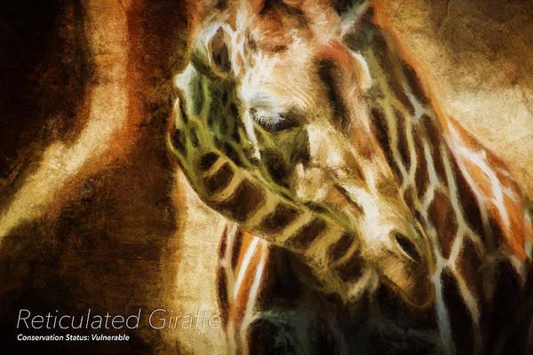 Photograph - Reticulated Giraffe Cs by Belinda Greb