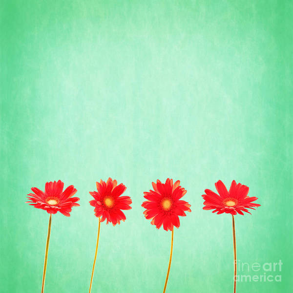 Pastel Drawing Photograph - Retro Flowers by Delphimages Photo Creations