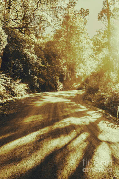 Transport Photograph - Retro Rainforest Road by Jorgo Photography - Wall Art Gallery