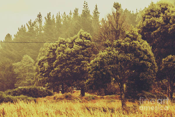 Grassland Photograph - Retro Rural Tasmania Scene by Jorgo Photography - Wall Art Gallery