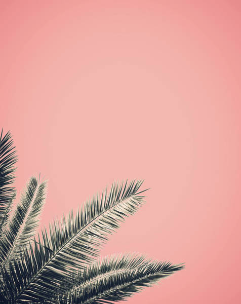 Wall Art - Photograph - Retro Style Palm Tree by Mr Doomits